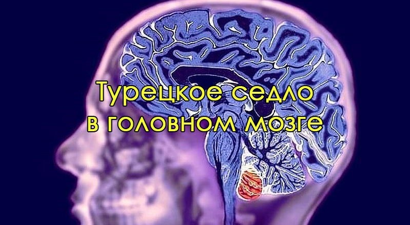 мозговые паразиты у человека симптомы