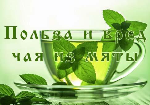 Чай из мяты польза и вред, показания и противопоказания